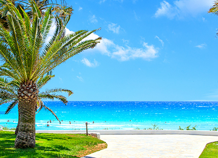 palm tree sea cyprus